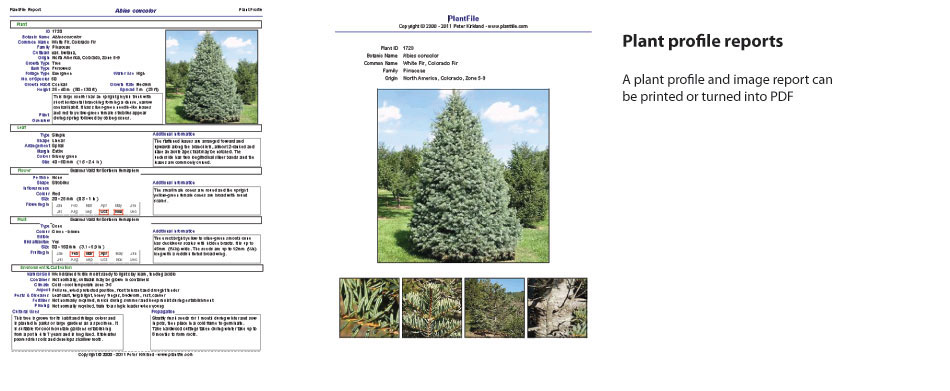 Plant-profile-report.jpg